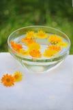 Tratamento com flores do calendula foto de stock royalty free