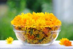 Tratamento com flores do calendula imagem de stock