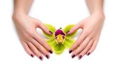 Tratamento de mãos bonito Fotografia de Stock