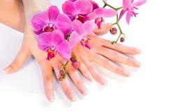 Tratamento de mãos e orquídea no branco foto de stock royalty free