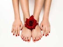 Tratamento de mãos e pedicure bonitos com uma rosa fotografia de stock royalty free