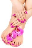 tratamento de mãos e pedicure com uma flor da orquídea Foto de Stock Royalty Free