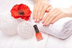 Tratamento de mãos francês com a flor vermelha da papoila Fotografia de Stock