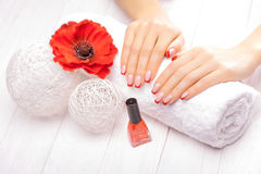 Tratamento de mãos francês com a flor vermelha da papoila Fotos de Stock