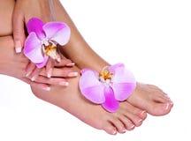 Tratamento de mãos francês nos pés e nas mãos fêmeas bonitos Imagens de Stock