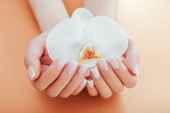 Tratamento de mãos francês de Ombre com a orquídea no fundo alaranjado A mulher com tratamento de mãos francês do ombre branco gu fotos de stock royalty free