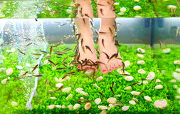 Tratamento dos termas do pedicure, peixe do garra do rufa Fotografia de Stock Royalty Free