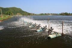 Tratamiento de aguas de la granja del camarón. Foto de archivo