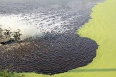 Tratamiento de aguas residuales usando la lenteja de agua Fotografía de archivo libre de regalías