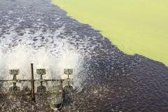 Tratamiento de aguas residuales usando la lenteja de agua Imagen de archivo libre de regalías