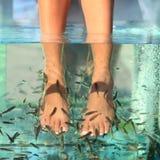 Tratamiento de la piel del balneario de los pescados Imagen de archivo