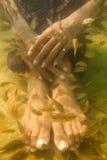 Tratamiento del pedicure del balneario de los pescados Imagen de archivo libre de regalías