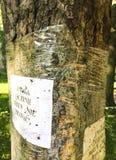 Tratamiento enfermo del árbol Fotos de archivo libres de regalías
