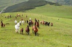 Tratamiento por lotes de caballos Imagenes de archivo