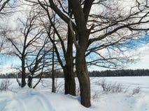 Trate el cielo azul y los árboles con suavidad desnudos al borde de campo nevado Imagen de archivo