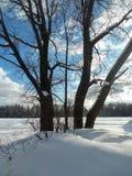 Trate el cielo azul y los árboles con suavidad desnudos al borde de campo nevado Foto de archivo