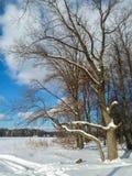 Trate el cielo azul y los árboles con suavidad desnudos al borde de campo nevado Fotos de archivo