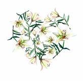Trate el corazón con suavidad hermoso del bosquejo polvoriento beige blanco de la mano de la acuarela de los lirios stock de ilustración