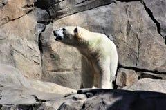 Trate el oso con suavidad Foto de archivo libre de regalías