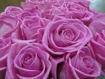 Trate la rosa con suavidad de la aguamarina imagenes de archivo
