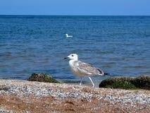Trate las ondas con suavidad del mar de Azov Fotos de archivo