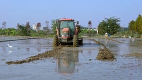 trator 4K que ara o campo do arroz no campo de Taiwan Plantações da agricultura video estoque