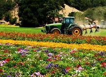 Trator no campo das flores foto de stock royalty free