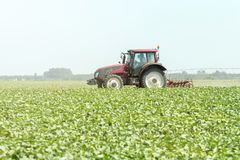 Trator no campo verde M?quina da agricultura fotografia de stock