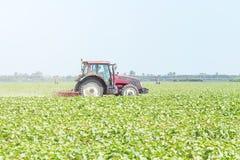 Trator no campo verde M?quina da agricultura imagens de stock