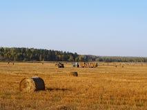 Trator que colhe pacotes da palha, fundo da agricultura do outono Fotos de Stock Royalty Free