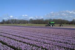 Trator verde no campo com os hyacinths sob o typica Imagem de Stock Royalty Free