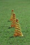Tratt på grönt gräs Royaltyfri Fotografi