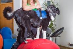 Trattamento del cane Fotografia Stock Libera da Diritti