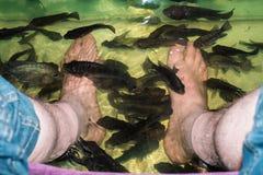 Trattamento della pelle della stazione termale del pesce Fotografia Stock
