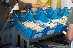 Trattamento industriale e lavare della verdura bianca o dell'asparago immagine stock
