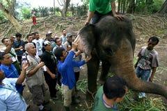 Trattamento medico dell'elefante Fotografie Stock Libere da Diritti