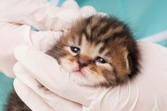 Trattamento veterinario Immagine Stock