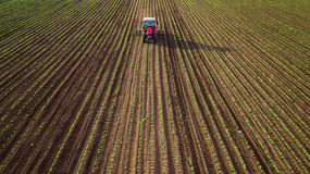 Trattore agricolo che ara e che spruzza sul giacimento di grano fotografie stock libere da diritti