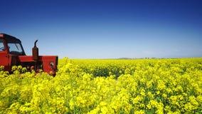 Trattore agricolo in un giacimento del seme di ravizzone, bello giorno di molla stock footage