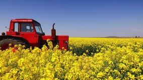Trattore agricolo in un giacimento del seme di ravizzone ed in un cielo blu, bello giorno di molla video d archivio