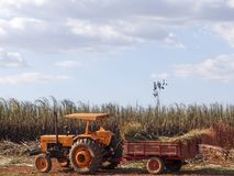 Trattore in canna da zucchero del raccolto del lavoro Immagine Stock Libera da Diritti