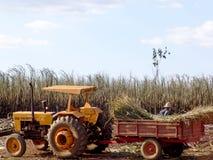 Trattore in canna da zucchero del raccolto del lavoro Immagine Stock