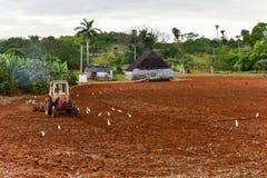 Trattore che ara campo - Cuba Fotografia Stock