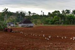 Trattore che ara campo - Cuba Immagine Stock Libera da Diritti