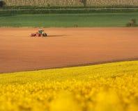 Trattore che ara un campo in Moravia del sud al tramonto Fotografie Stock Libere da Diritti