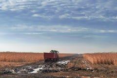 Trattore che coltiva nel campo di grano Agricoltura c del raccolto del campo di grano Fotografia Stock