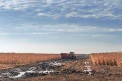 Trattore che coltiva nel campo di grano Agricoltura c del raccolto del campo di grano Immagini Stock