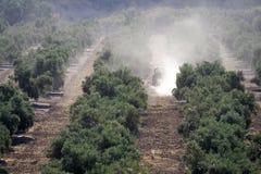 Trattore che fa lavoro in una piantagione di di olivo fotografia stock