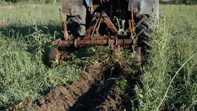 Trattore che lavora al giacimento della patata Raccogliendo le patate con per mezzo del trattore Fotografia Stock