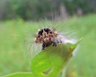 Trattore a cingoli del Bevitore-lepidottero Immagini Stock Libere da Diritti